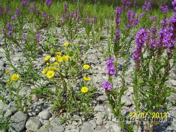 цветы у реки