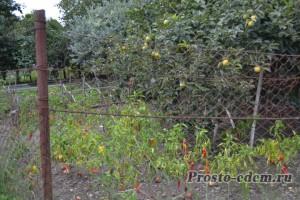огород в краснодарском крае