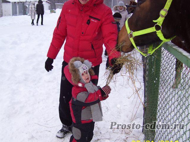 лошади на горсовете