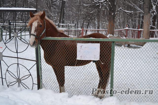 Катание на лошадях на Горсовете