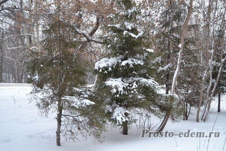 снежные елочки