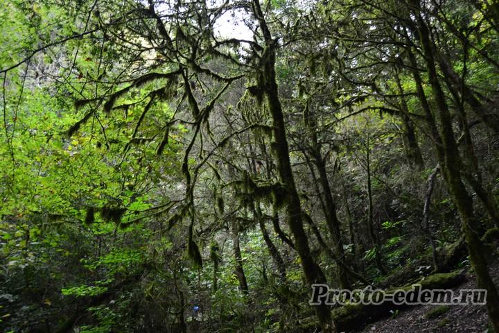 Целебный лес