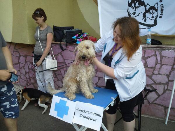 выставка собак в парке якутова