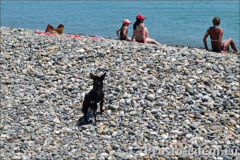 Галька на пляже Адлера