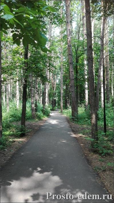 Лес в Уфе