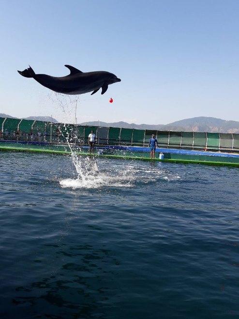 Дельфинарий в Турции