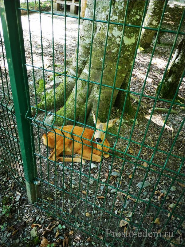 zoopark-v-krasnoj-polyane